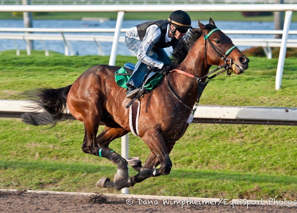 Eight Set For Friday S Curlin Stakes Horse Racing News