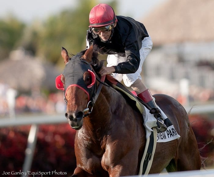 Showdown In The Ville Wise Dan And Point Of Entry To