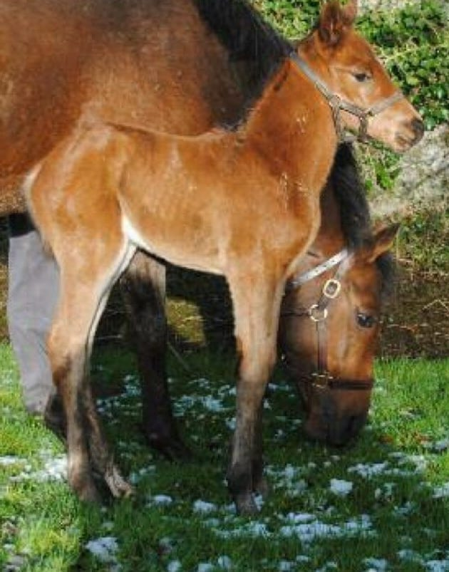 Goldikova and her 2013 colt