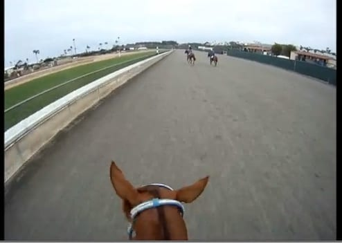 Blind Luck jockey cam