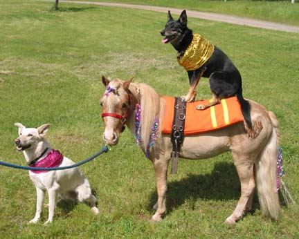 Dog-and-pony show
