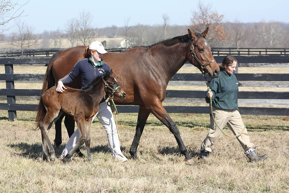 How Old Is 'Too Old' For A Broodmare? - Horse Racing News