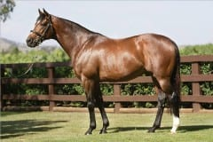 Galileo at Coolmore Stud