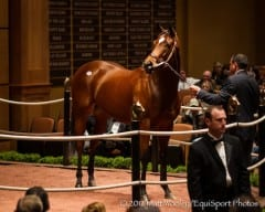 Havre de Grace in the ring at last year's Fasig-Tipton November sale
