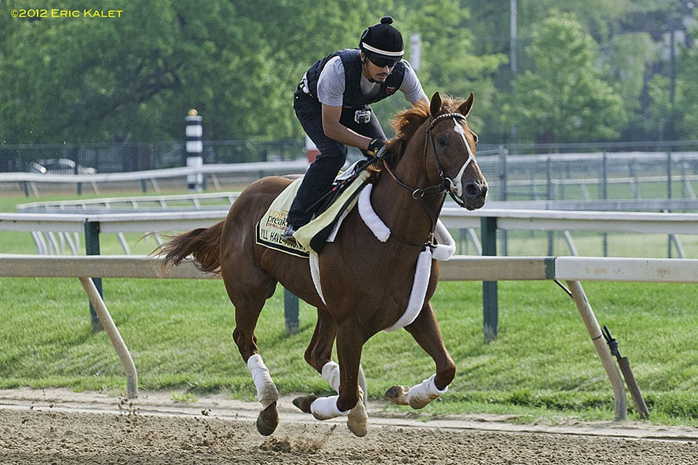 I'll Have Another jogs before Preakness 5-16