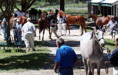 An international cast of buyers, sorting through some of the yearlings offered at the 2012 Keeneland September sale