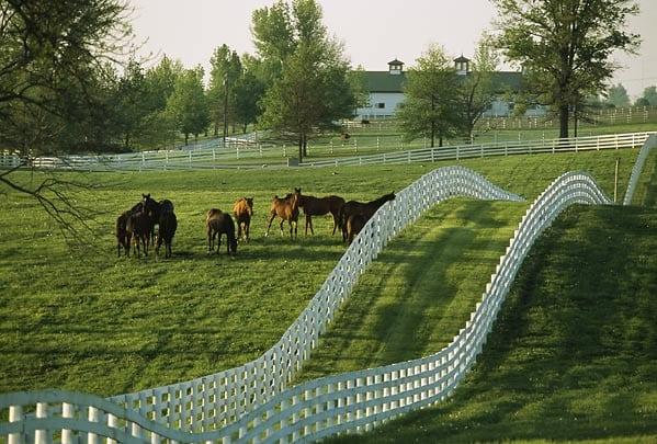 Kentucky Thoroughbred farm