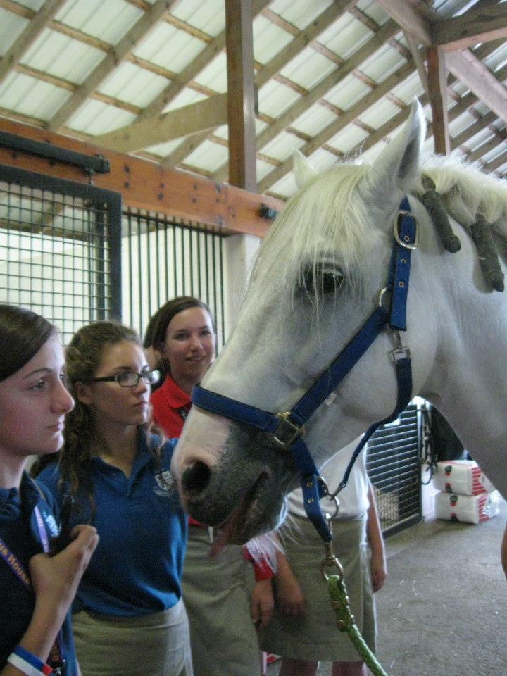 Lexington Catholic Equine visits Cavalia horses
