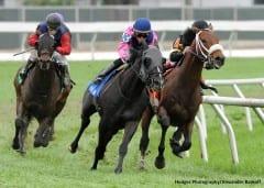 Turf racing at Fair Grounds