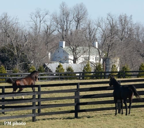 Pioneerof the Nile (right) and Bodemeister at WinStar