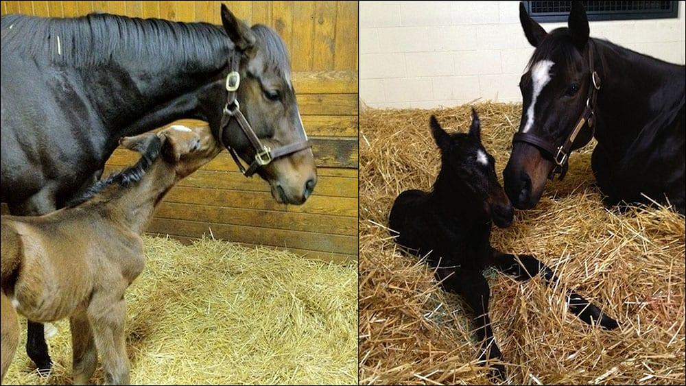 Happy Mother S Day Zenyatta And Rachel Alexandra Horse