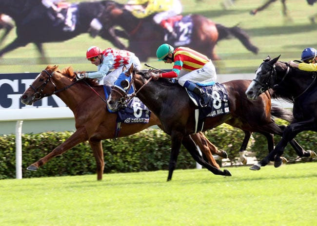 Red Cadeaux, winner of the 2012 HK Vase, is one of 140 horses nominated to the Melbourne Cup