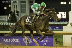 Royal Delta won the Breeders' Cup Ladies Classic in 2011 and 2012