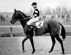 Schick broke War Admiral and Seabiscuit as yearlings