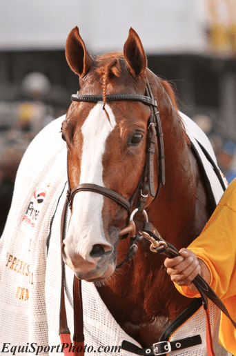 Romans hosts shackleford meet and greet horse racing news thanks in large part to the power of twitter facebook and the welcoming hospitality of trainer dale romans and crew a crowd of approximately 80 horse m4hsunfo