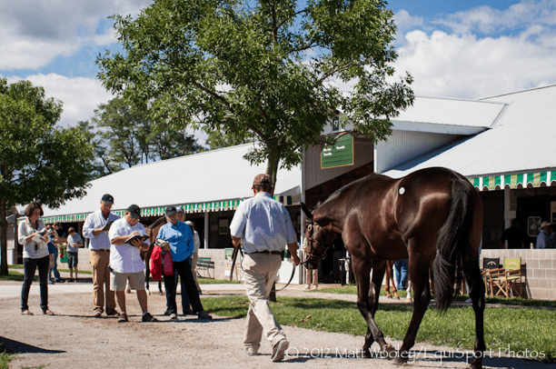 Follow Day 7 Of The Keeneland Yearling Sale Horse Racing