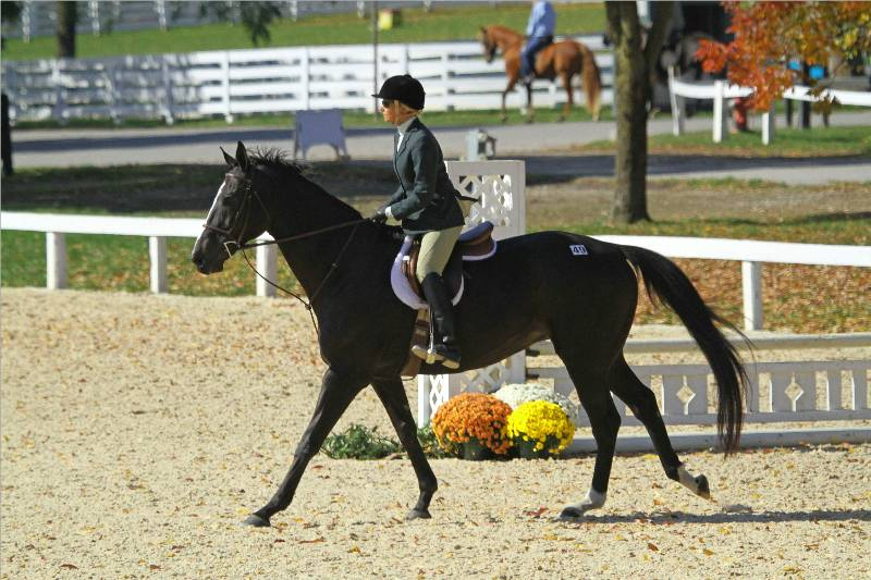 Thoroughbred Incentive Program To Hold Championships At