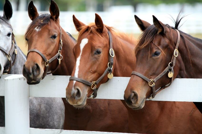 Industry commitment on Thoroughbred aftercare cannot wait