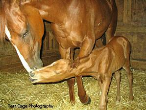 Tiger Eyed and foal, Louisiana Downs 2008