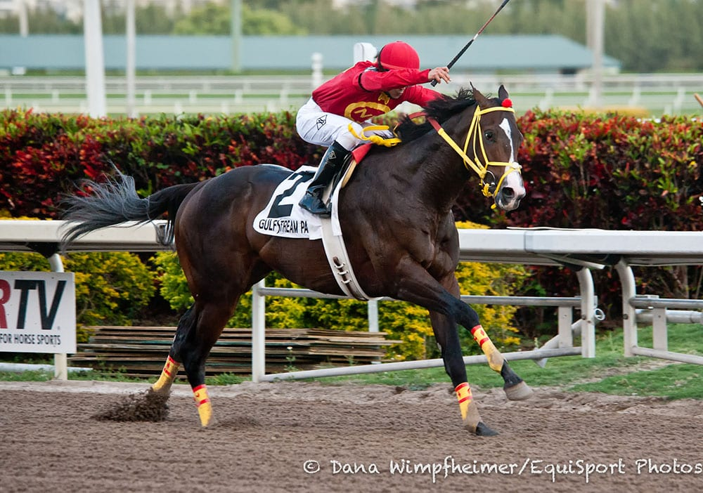 Trinniberg Will Run In Preakness If Bodemeister Doesn T