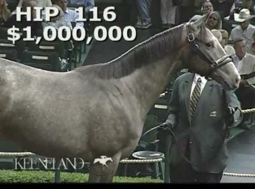 $1 million for Unbridled's Song filly - Horse Racing News