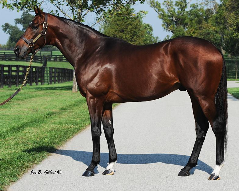 Spendthrift Farm Sells Stallions Wilburn Victor S Cry