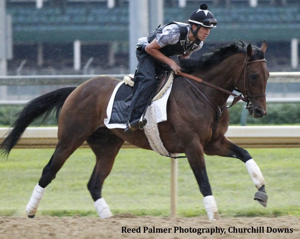 Crown Of Thorns Retired To Stand At Spendthrift Horse