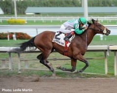 Csaba settles in to win the Harlan's Holiday