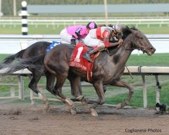 Orb charges past Violence in Fountain of Youth