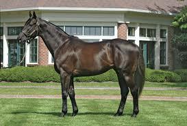 Rock Hard Ten sold to Korean interests - Horse Racing News   Paulick Report