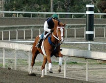 A horse works at San Luis Rey Downs