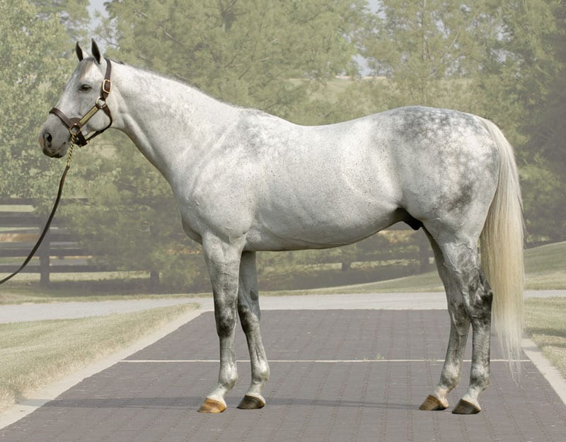 Taylor Made Stallion Unbridled S Song Dies At 20 Horse