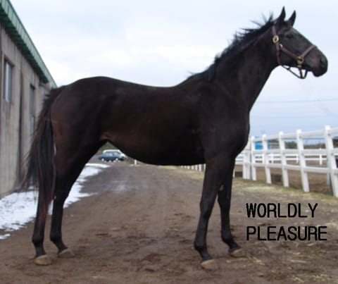 Worldly Pleasure, dam of Game On Dude, now in Korea