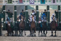 Capo Bastone stumbles at the start of the 2013 Spiral Stakes at Turfway