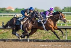 Shanghai Bobby and Palace Malice (rail) work earlier this spring at Palm Meadows