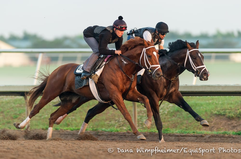 Discreet Dancer and Verrazano work in tandem at Palm Meadows in early March