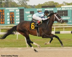 Verrazano wins the Tampa Bay Derby