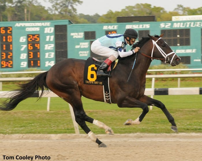 Verrazano wins the Tampa Bay Derby
