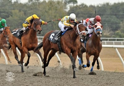 Strong Card On Tap For Obs Day Of Champions Horse Racing