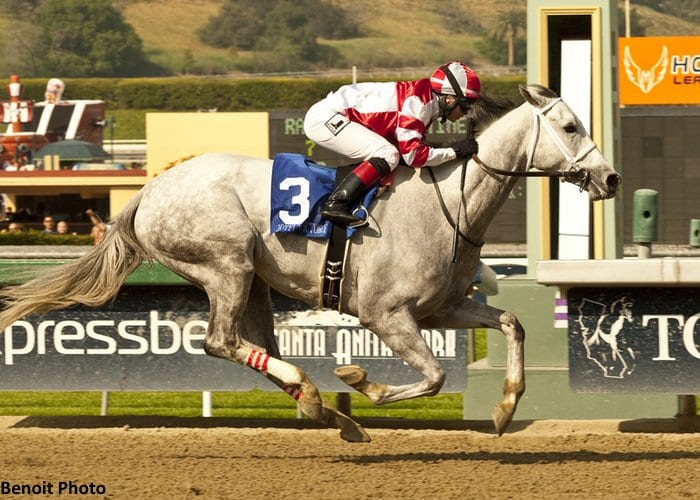 Joyful Victory wins the G1 Santa Margarita Stakes