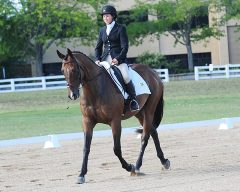 OTTB Showcase - Pirate's Bid 2