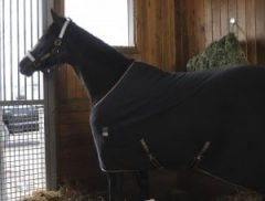 Rachel Alexandra enjoys the view from her stall at Stonestreet Farm