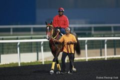 Trinniberg, shown after a tune-up for 2013 Dubai Golden Shaheen