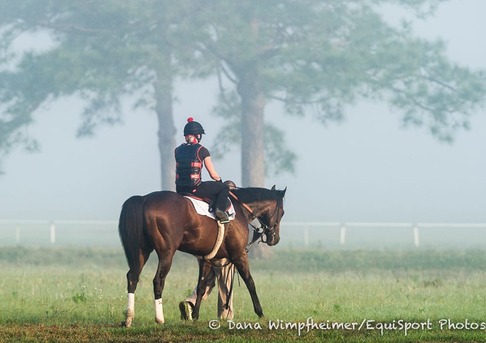 Kentucky Derby winner Orb heads back to barn after a morning work at Payson Park in 2013