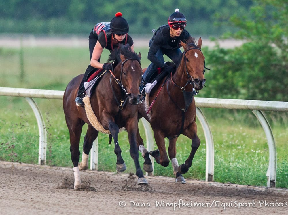 In Training Timing Can Be Everything Horse Racing News