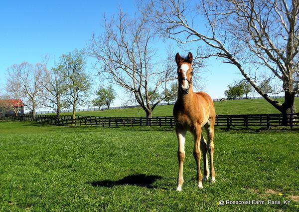 Goldencents in his early days at Rosecrest Farm