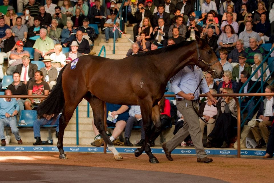 Half brother to Black Caviar set Aussie record at $5M at Inglis Easter Sale