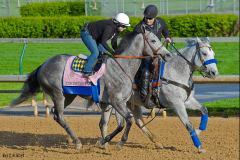 Midnight Lucky jogs at Churchill Downs Apr. 28