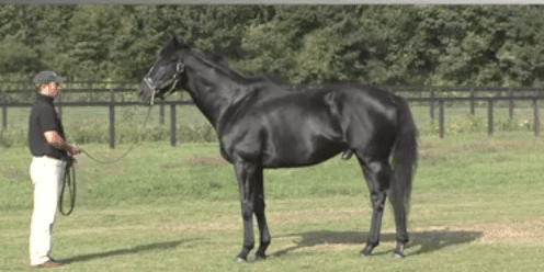 War Emblem May Be Too Smart Horse Racing News