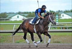 Verrazano in training at Palm Meadows. Photo Pam DiOrio.
